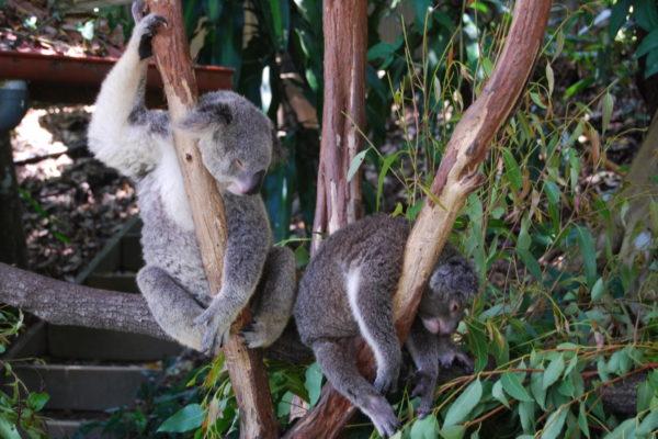 2008 Australia-2