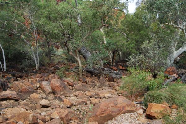 2008 Australia-6