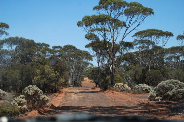 2010 Australia-10