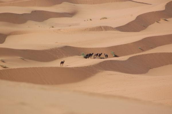 2011 Maroko quadami-2
