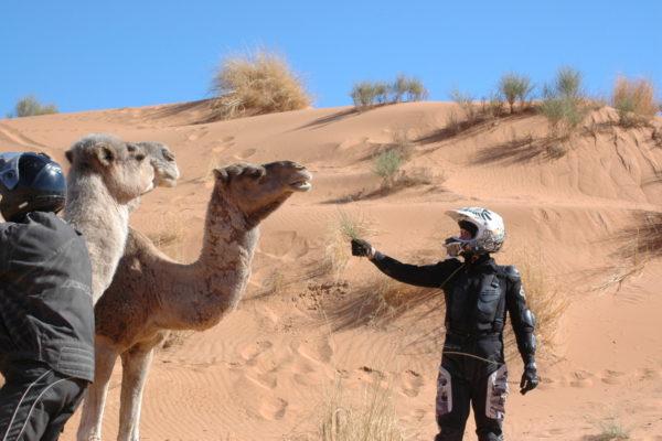 2011 Maroko quadami-6