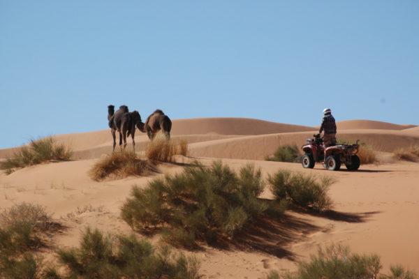 2011 Maroko quadami-7