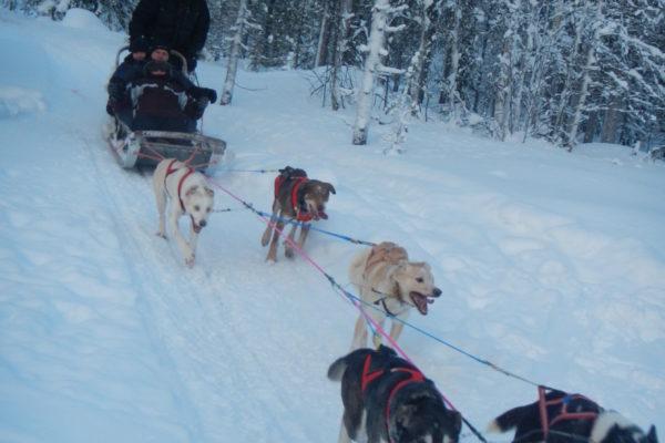 2014 Laponia zimą-8